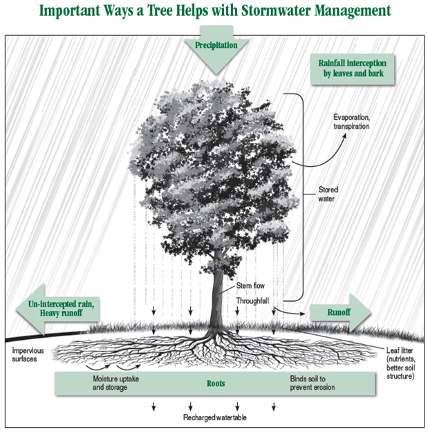 Your hardworking backyard tree (source: Arbor Day Foundation).